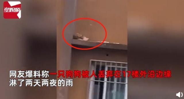 小狗被遗弃在17楼边缘淋雨2天2夜 系被人恶意抛弃