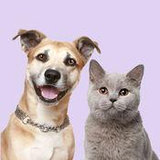 狗狗翻译器 - 你的逗狗助手
