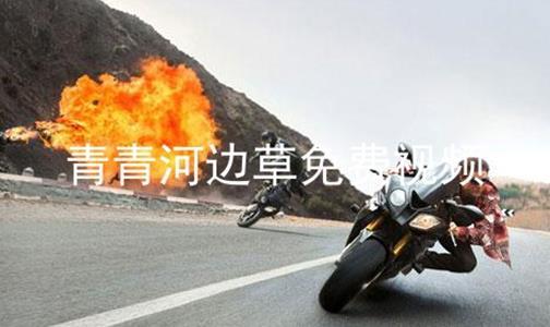 青青河边草免费视频软件合辑