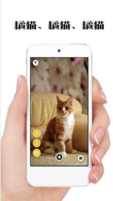 极简猫咪相机软件截图0