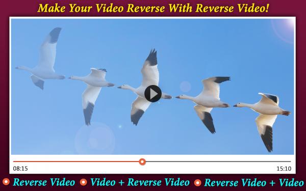 反向视频编辑器