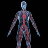 人体解剖3D模型