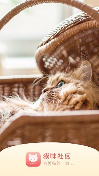 猫咪社区官网