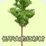 长不大的红杉树童话故