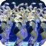 舞蹈视频教程