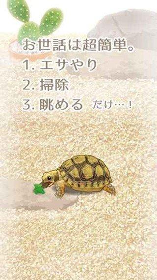治愈的龟养成软件截图2
