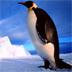 企鹅拼图游戏