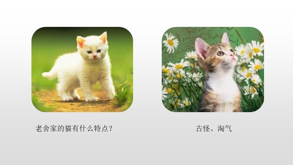 《我的动物朋友》习作PPT(第1课时)下载