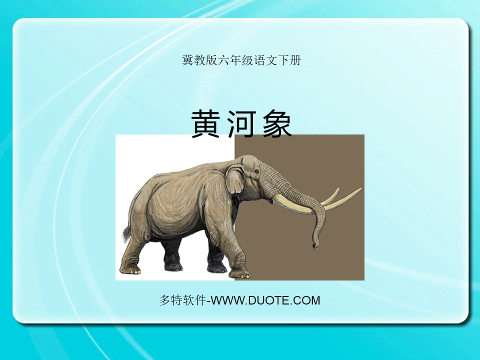 《黄河象》PPT课件3下载