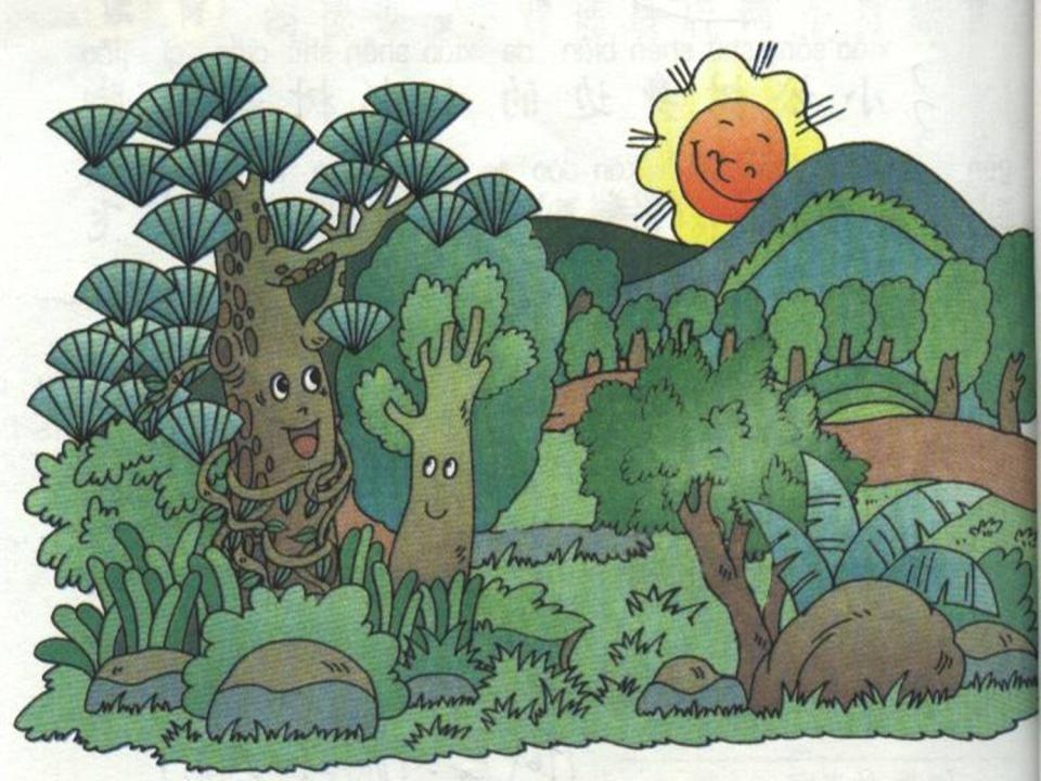 《松树和青藤》PPT课件3下载