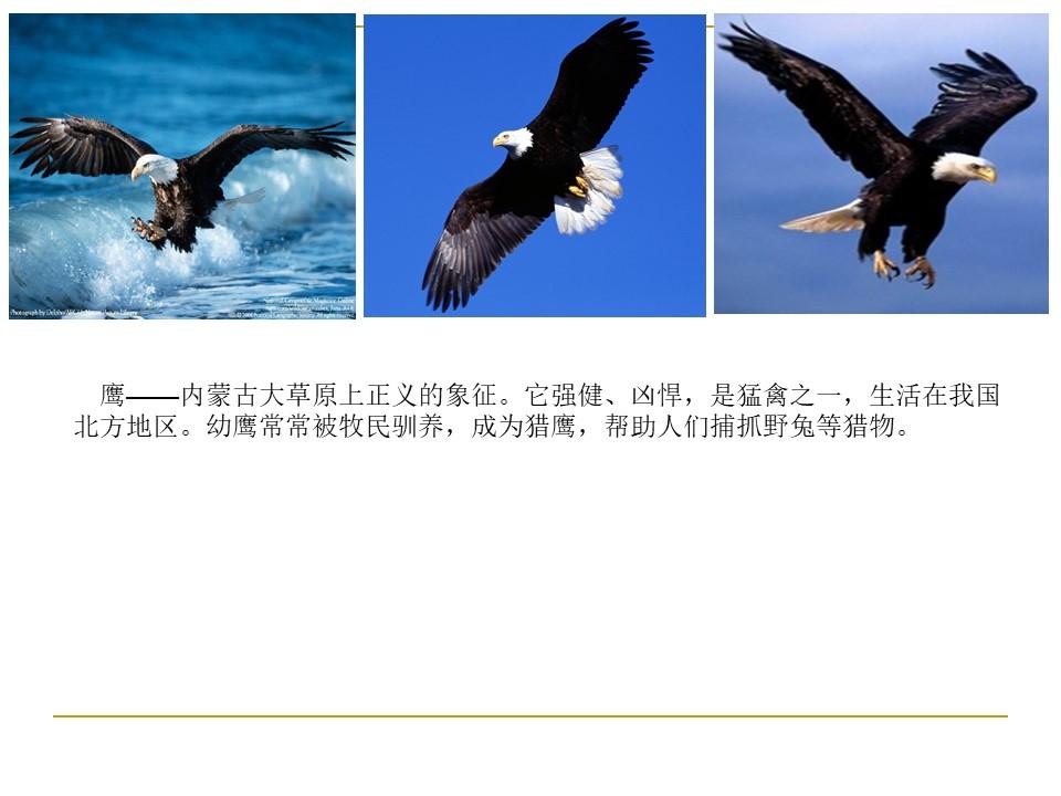 《成吉思汗和鹰》PPT课件4下载