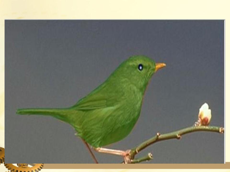 《放小鸟》PPT课件4下载