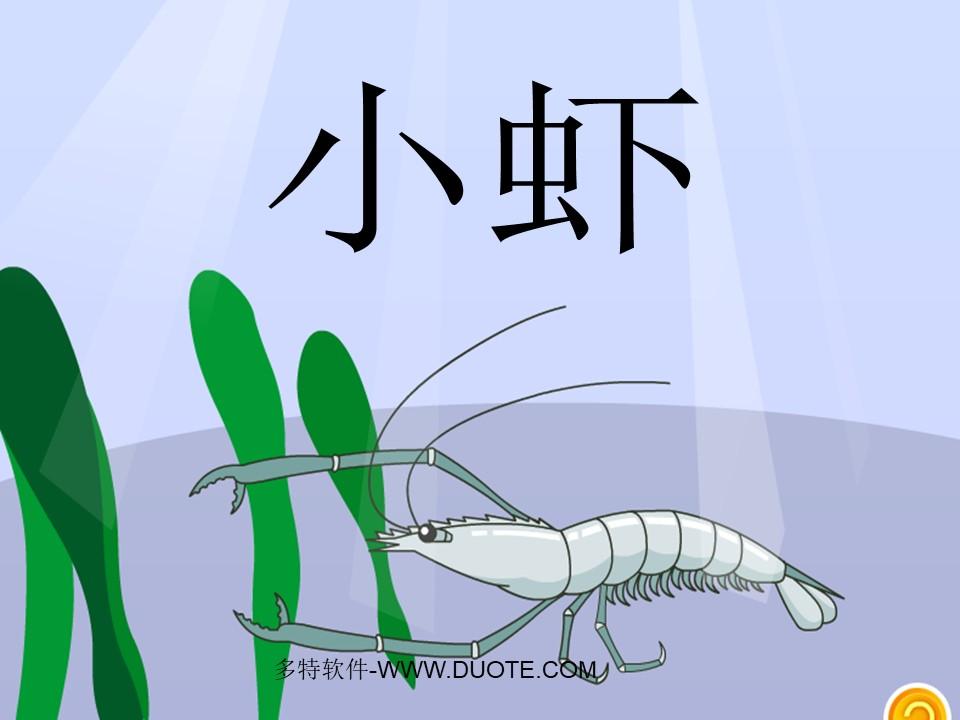 《小虾》PPT课件4下载