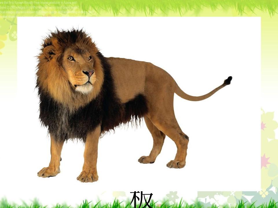 《狮子和兔子》PPT课件2下载