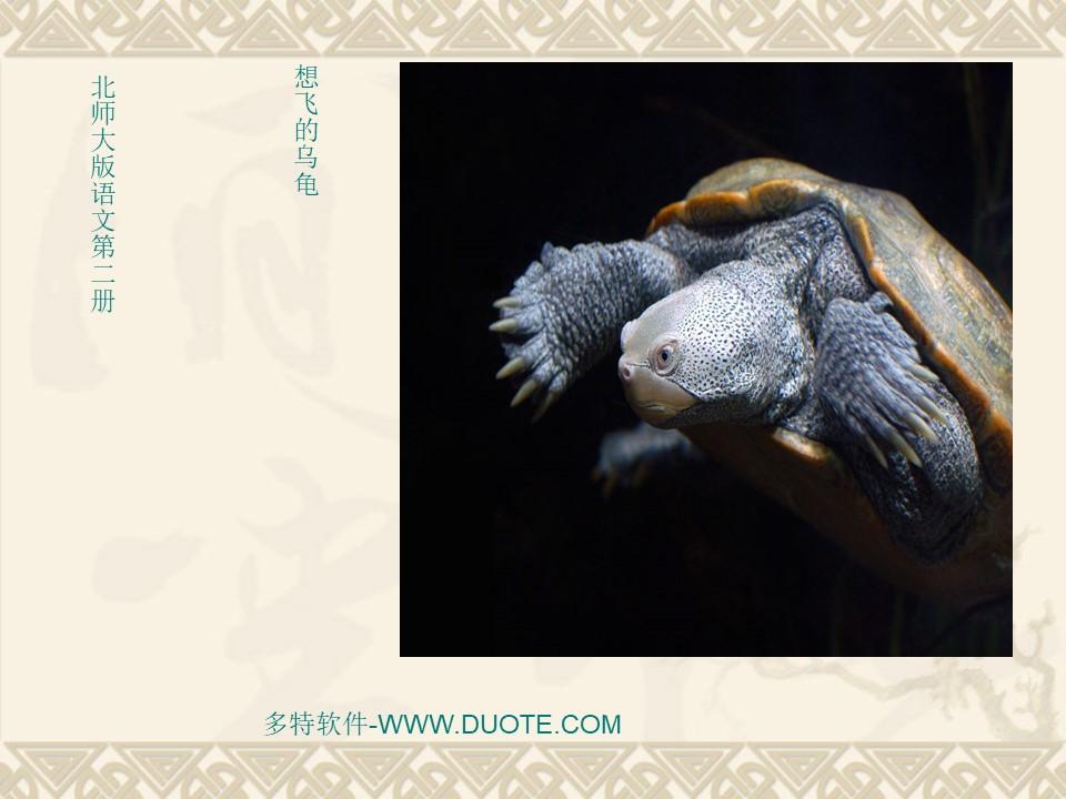《想飞的乌龟》PPT课件3下载
