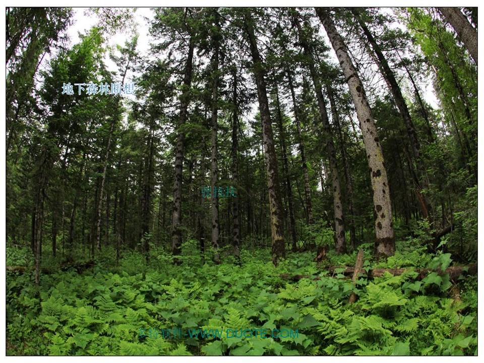 《地下森林断想》PPT课件2下载