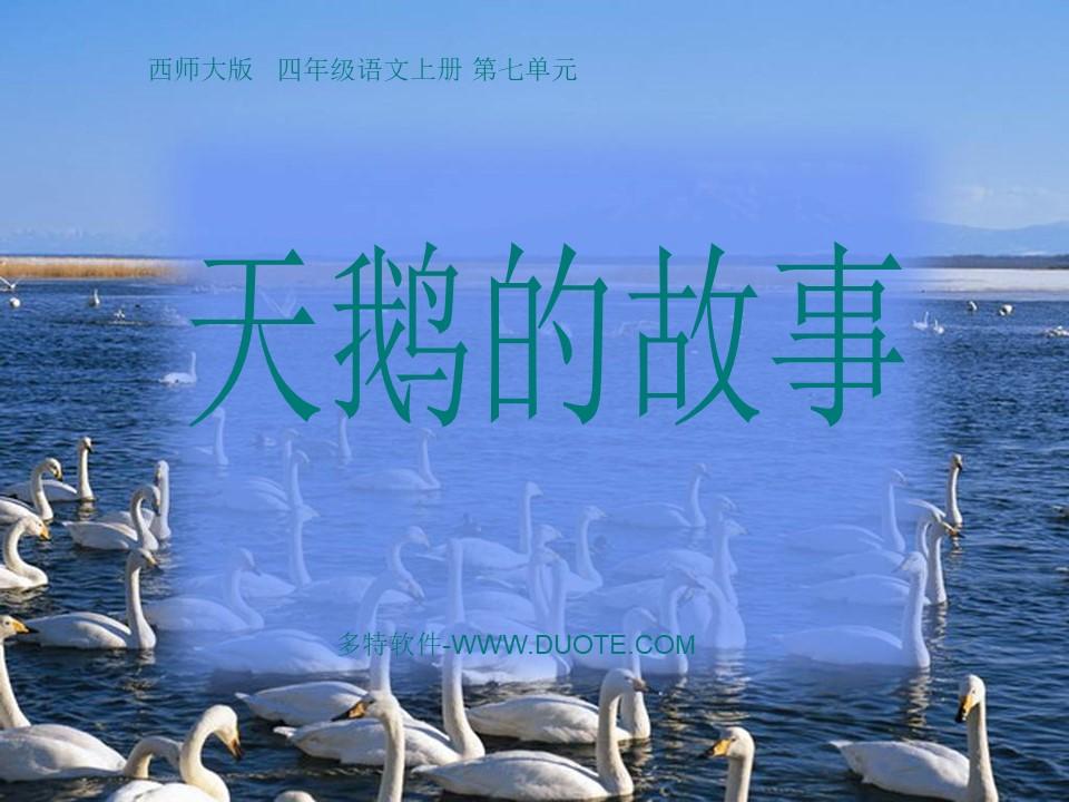 《天鹅的故事》PPT课件下载