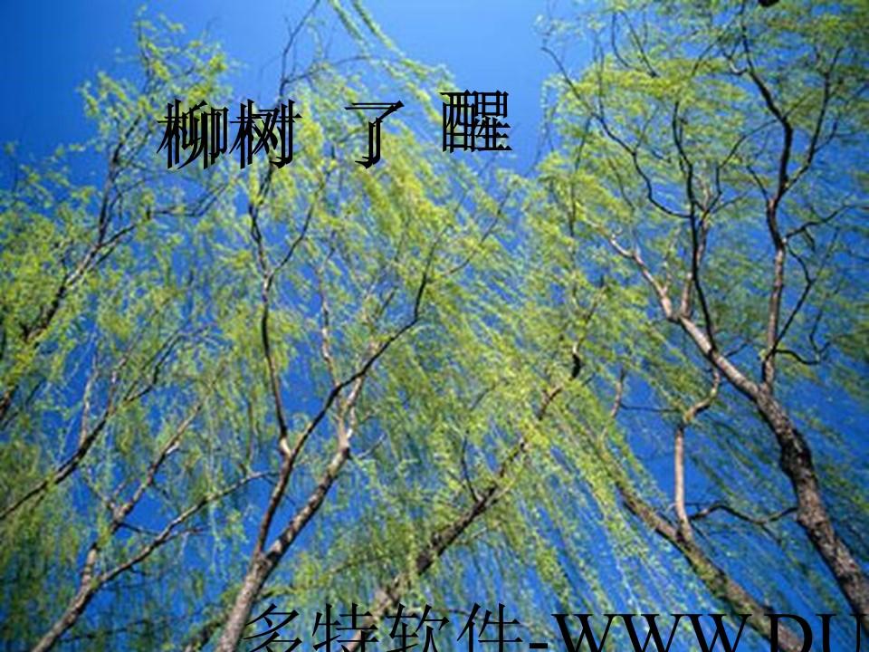 《柳树醒了》PPT课件2下载