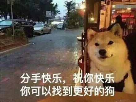 单身狗的快乐表情包 单身狗的快乐图片大全