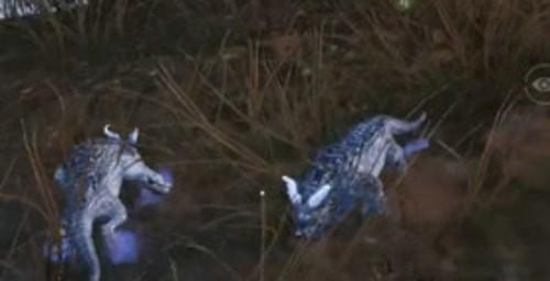 和平精英冰雪年兽怎么驯服 和平精英冰雪年兽怎么获得