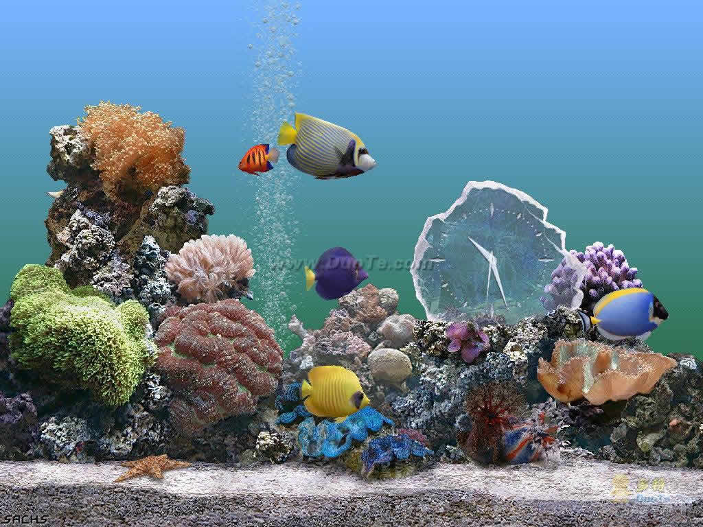 水族馆屏保(Marine Aquarium)下载