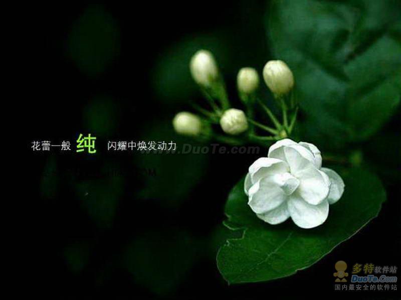 绿色花朵PPT模板下载