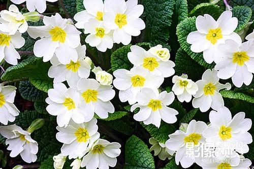 拍摄花卉的实用方法
