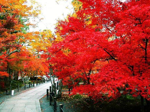 红黄秋叶拍摄的9个技巧