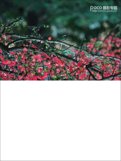 用Photoshop给花卉摄影作品增加亮点